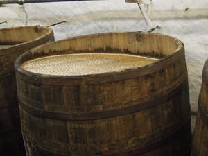 бочка с суслом, в котором используются дрожжи чистых культур